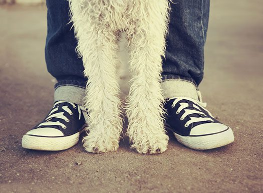 Man and dog on street
